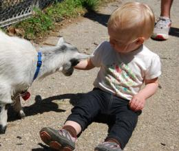 A toddler interacts with a baby goat at the Upper Main Line YMCA through a Toddlers in Nature educational program